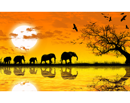 Africa photo digital canvas