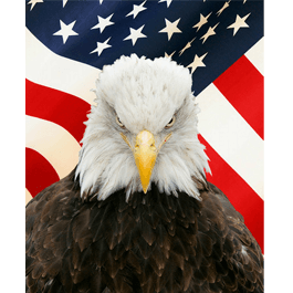 American Eagle wall paper
