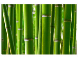 Bamboos printing on canvas