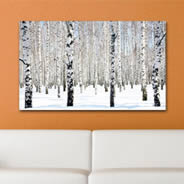 Winter Birch snow wall canvas