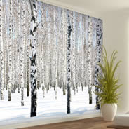 Snow Birches Winter Trees wall murals