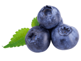 Blueberry wall decal