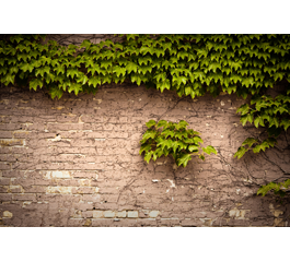 Bricks and leaves wall paper
