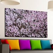 Cherry Blossoms on framed canvas