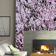 Cherry Blossom wall papers