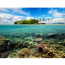 Coral Island wall canvas