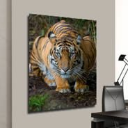 Crouching Tiger framed canvas