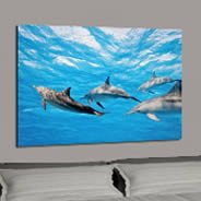 Dolphins photo canvas