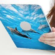 Dolphins Ipad decals skin