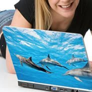 Dolphins laptop skin