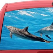 Dolphins see through car decal