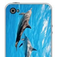 Dolphins iPhone skins