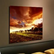 Equine Passage framed canvas