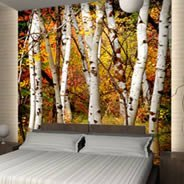 Fall Birch Trees mural