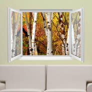 Fall Birches Trees - Faux Window