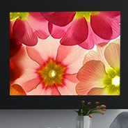 Pastel Flowers digital canvas