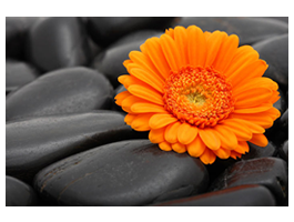 Zen Flower photos printed on framed canvas