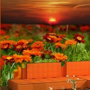 Flowers at Sunset wall paper