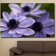 Purple Flowers photos printed on framed canvas