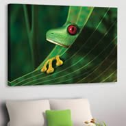 My Frog digital photo canvas