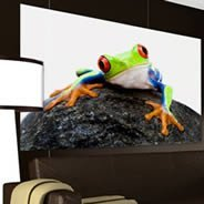 Frogs digital pictures printed on canvas