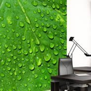Green Leaf wall murals