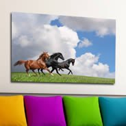 Horses digital photo canvas