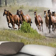 Horses Racing wall papers