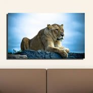 Lioness digital art canvas