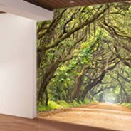 Oak Alley wall papers