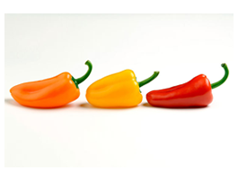 Color Peppers digital canvas