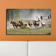 Racing Horses framed canvas