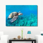 Ocean Sea Turtles wall canvas