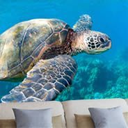Ocean Sea Turtle removable wall murals
