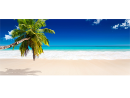 Palm tree beach wall murals