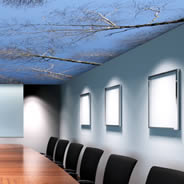 Ceiling Sky Birch Tree wall murals
