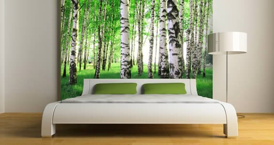 Birch tree wall murals dezign with a z for Birch trees wallpaper mural
