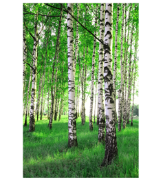 Spring Birch Tree printed on framed canvas