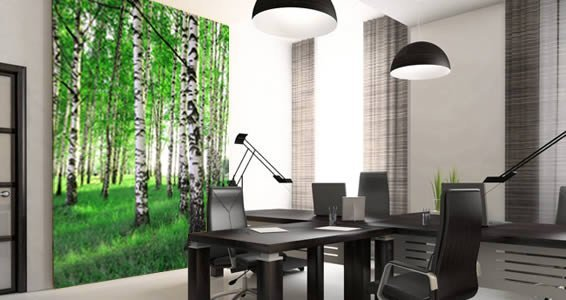 Birch Tree wall murals Dezign With a Z
