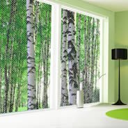 Birch Forest see through window decals