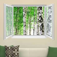 Birch Trees Faux Window Murals