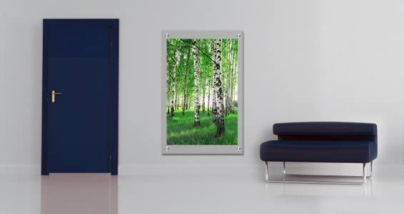 Birch Tree Forest Plexiglass Stand Off