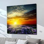 Sunset Lavender Fields wall canvas