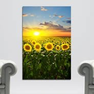 Sunset Flowers Fields wall canvas