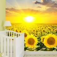 Sunset Flower Fields wall murals
