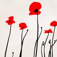 Wall Decals Poppies