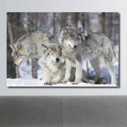 Winter Wolves framed canvas