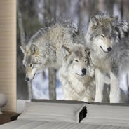 Winter Wolves wall mural