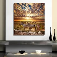 Savannah Zebras Sunset on canvas